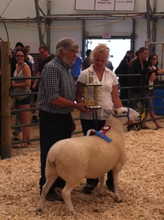 2011 Provincial Exhibition: Champion Ewe