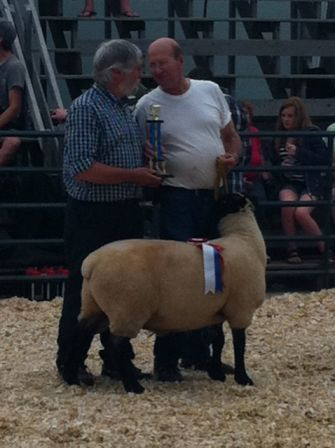 2011 Provincial Exhibition: Champion Ram