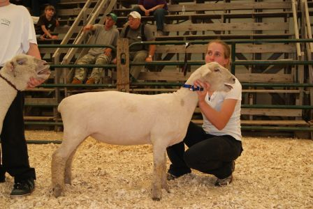 2011 Provincial Exhibition: Holly and Southdown