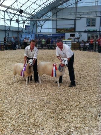 2011 Provincial Exhibition: North Country Cheviots