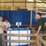 2011 Provincial Exhibition: weighing lambs