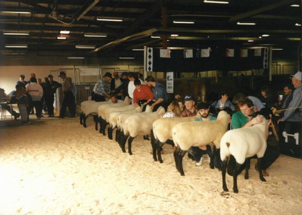 Purebred Sheep Breeders Association of Nova Scotia – Sheep Sale